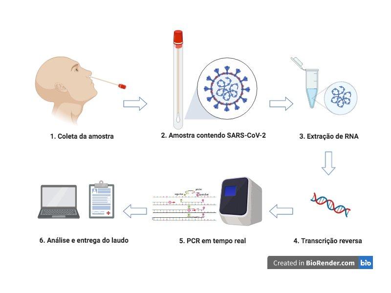 etapas-diagnosticocovid-figurageradacomprogramabiorender-m18_u34_13052020115037